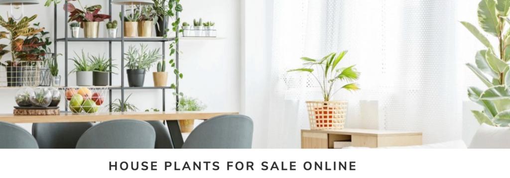 Screenshot advertising house plants sale.